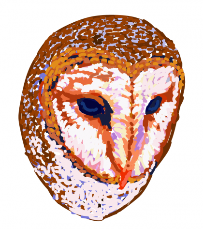 Owl Digital Painting